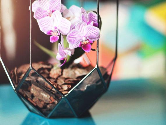 13, vase, geometric, terrarium, orchid, glass, metal