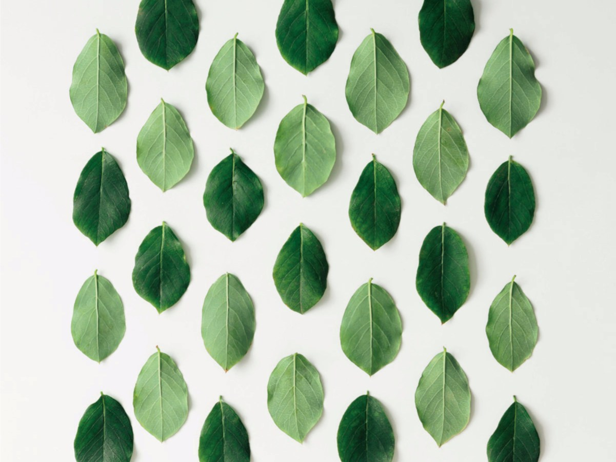 Greenery: products and ideas for our home