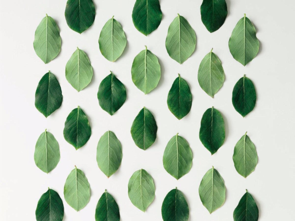 Greenery: prodotti e suggestioni per la nostra casa