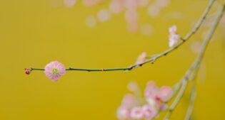 La primavera entra nelle nostre case: i colori per essere trendy nel 2021